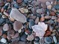 John Barger Maple Leaf And Rocks Along The Shore Of Lake Superior
