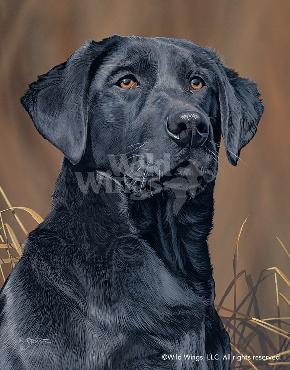 Scot Storm Loyal Companion - Black Lab Signed Open Edition on Paper
