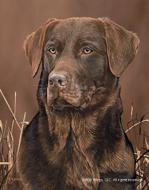 Scot Storm Loyal Companion - Chocolate Lab Signed Open Edition on Paper