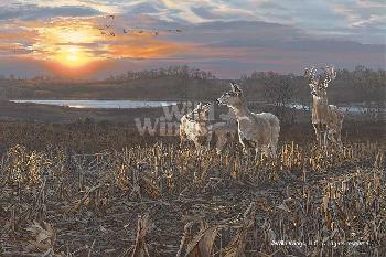 Scot Storm Evening Glow - Whitetail Deer
