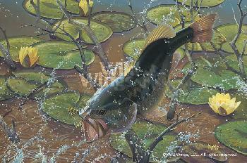 Mark Susinno Airborne - Largemouth Bass Remarque on Paper