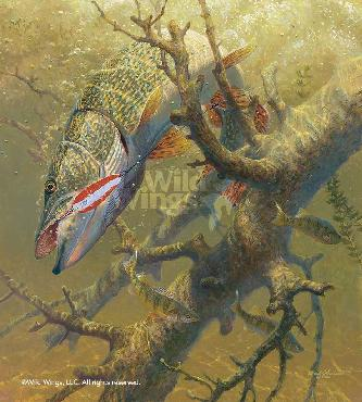 Mark Susinno Hung-Up - Northern Pike