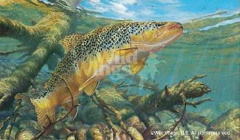 Mark Susinno Matching the Hatch - Brown Trout Artist