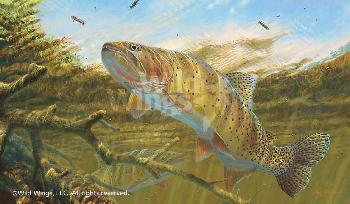 Mark Susinno Matching the Hatch - Cutthroat Trout Remarque on Paper