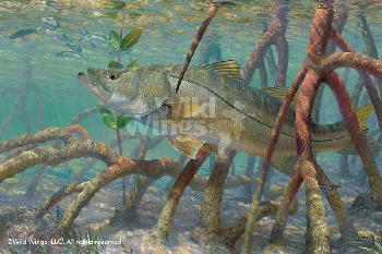 Mark Susinno Mean Streak - Snook Artist