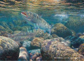 Mark Susinno On the Run - Atlantic Salmon