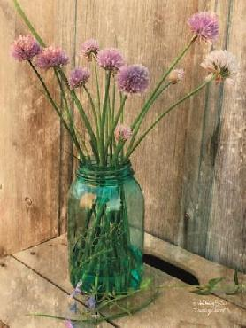 Anthony Smith Country Chives Canvas