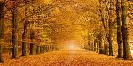 Pangea Images Woods In Autumn