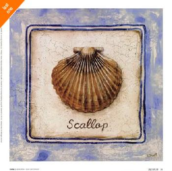 Sylvan Lake Collections Scallop   LAST ONES IN INVENTORY!!