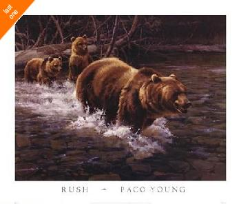 Paco Young Rush   LAST ONES IN INVENTORY!!