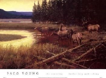 Paco Young The Crossing