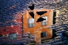Allan Wallberg Pigeons