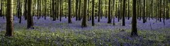 Duncan Fairytale Forest Panorama Canvas