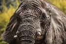 Duncan Elephant Front