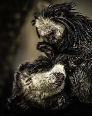 Duncan Little Cute Monkeys