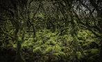 Duncan Mossy Forest