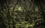 Duncan Mossy Forest 2