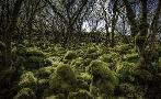 Duncan Mossy Forest 3