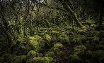 Duncan Mossy Forest 4