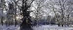 Duncan Falling Snow