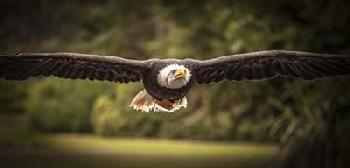 Duncan Sea Eagle Flight II Canvas
