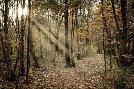 Duncan Autumn Sun 2