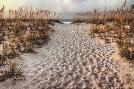 Michael Cahill Path To The Beach