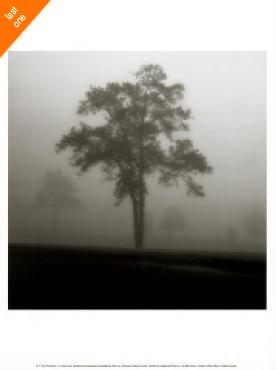 Jamie Cook Fog Tree Study I Canvas LAST ONES IN INVENTORY!!