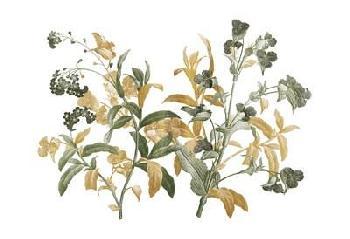 Jace Grey Floral Bushel Green Golds