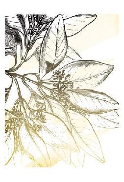 Jace Grey Fade Botanicals