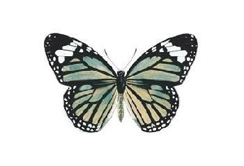 Jace Grey Neutral Butterfly