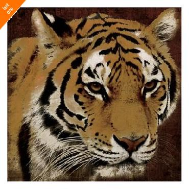 Jace Grey Tiger   LAST ONES IN INVENTORY!!