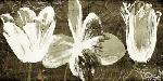 Onrei Floral Trio Amber