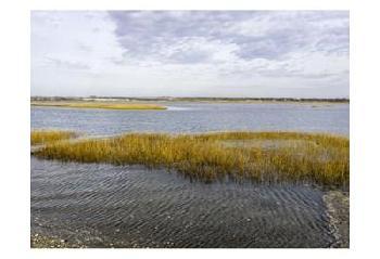 Orlando Winter Marsh