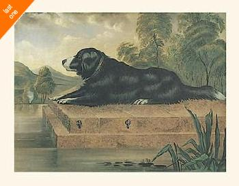 Anonymous A Newfoundland on a Plinth NO LONGER IN PRINT - LAST ONE!!