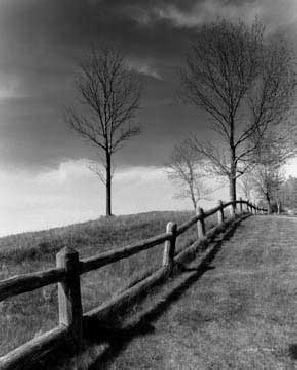 Monte Nagler Fences and Trees Empire MI