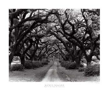 Monte Nagler Path in the Oaks 2 Louisiana