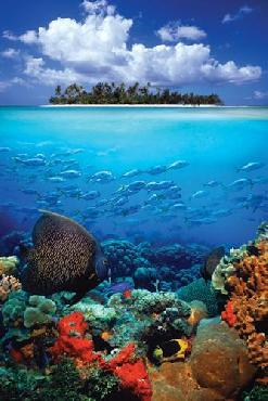 Anonymous Tropical Scenery I