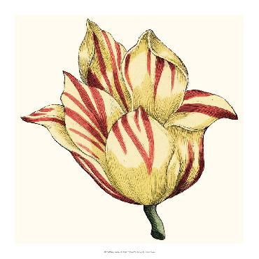 Vision Studio Tulip Garden III Open Edition Giclee - Matte