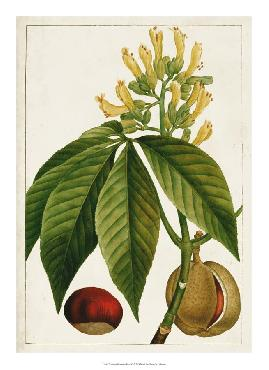 Anonymous Antique Flowering Trees VI Open Edition Giclee - Matte