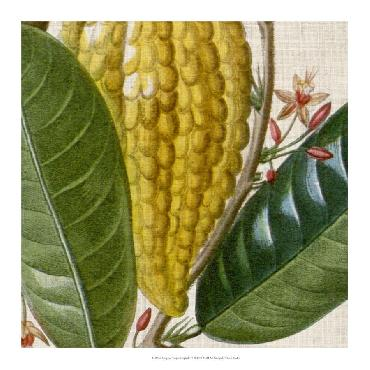 Vision Studio Cropped Turpin Tropicals VI Open Edition Giclee - Matte