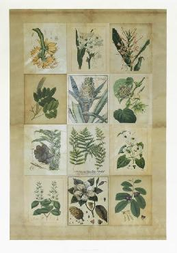 Vision Studio Botanical Sampler III Giclee Canvas