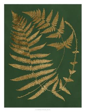 Vision Studio Gilded Ferns IV Open Edition Giclee - Matte