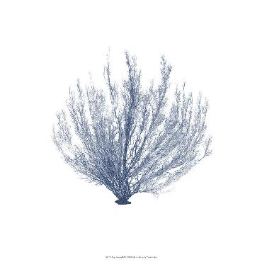 Vision Vision Studio Navy Seaweed VI Open Edition Giclee - Matte