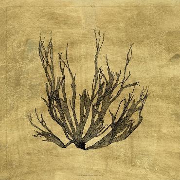 Vision Studio Lustr Coastal Seaweed I LUSTR