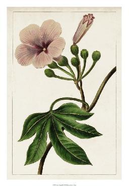 Anonymous Mauve Botanicals I Giclee Canvas