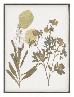 Jennifer Goldberger Book - Pressed Flowers I Open Edition Giclee - Gloss