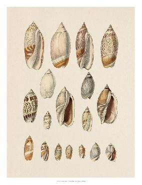Jennifer Goldberger Cone Shell Display I Open Edition Giclee - Gloss