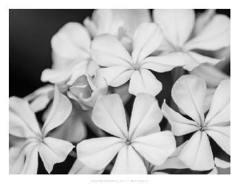 Eva Bane Botanical Under Cold Moonlight I Open Edition Giclee - Matte