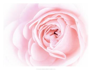 Eva Bane Pretty Pink Blooms I Giclee Canvas